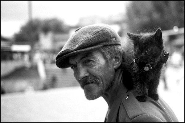Rīgas kaķis