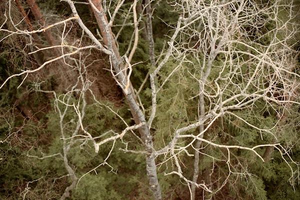 Siguldas rudens mežs