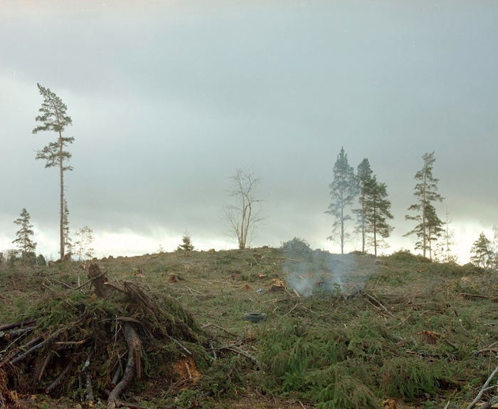 Meža cirsma