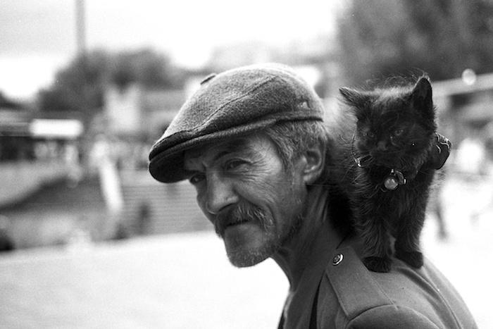 Kaķu pavēlnieks