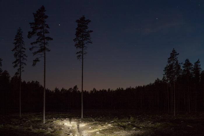 Ekoloģiskais koks