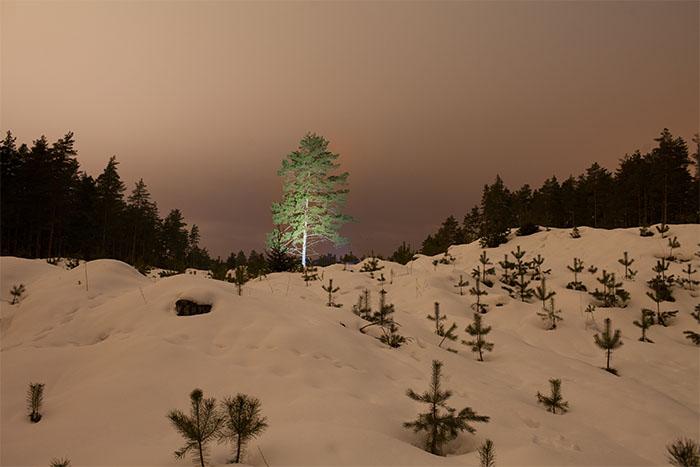 Ģirts Raģelis - Ekoloģiskais koks
