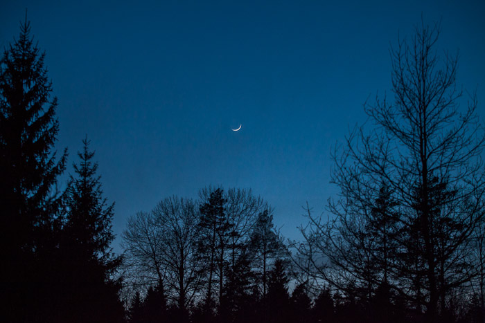 Distošs Mēness Mežā