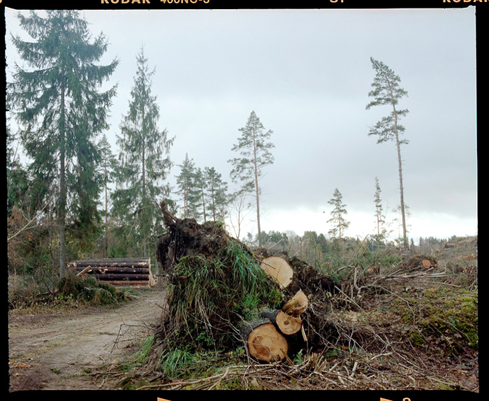 Ģirts Raģelis - Meža cirsma