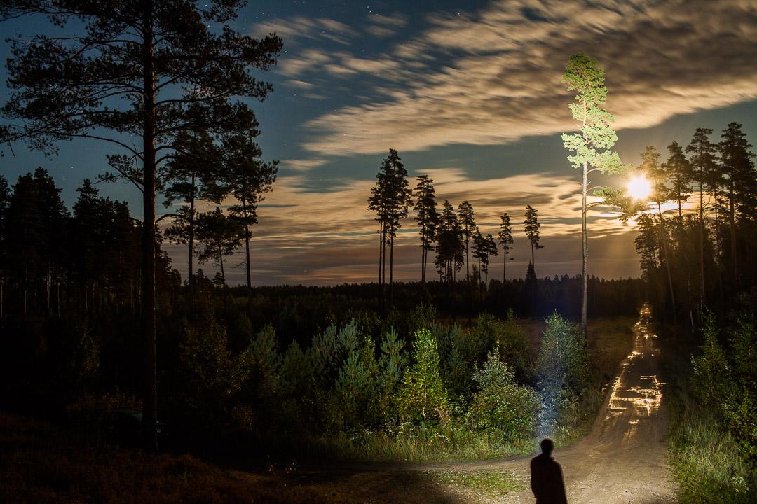 Mežs Naktī