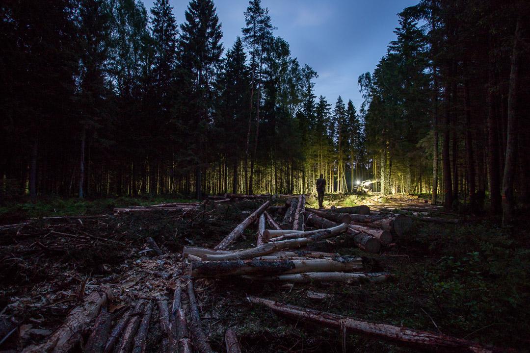 Cirsma - Latvijas Meži