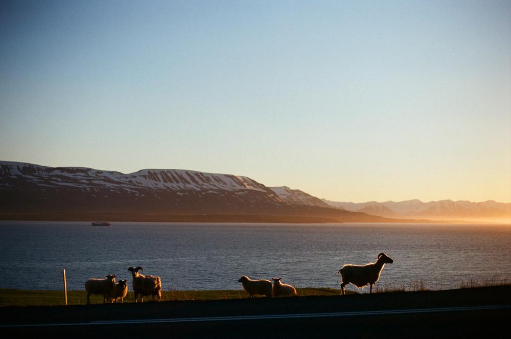 038-Islande-Iceland-Roadtrip