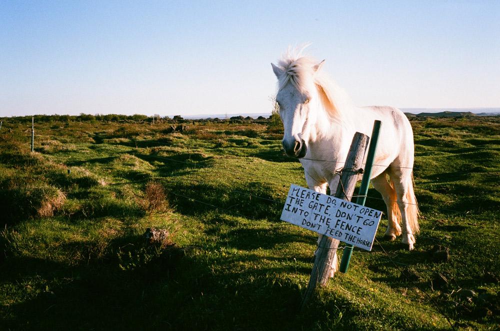 041-Islande-Iceland-Roadtrip