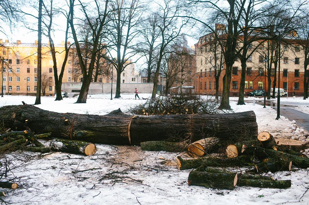 Līdz ar sniegu, Rīgā nokūst arī koki