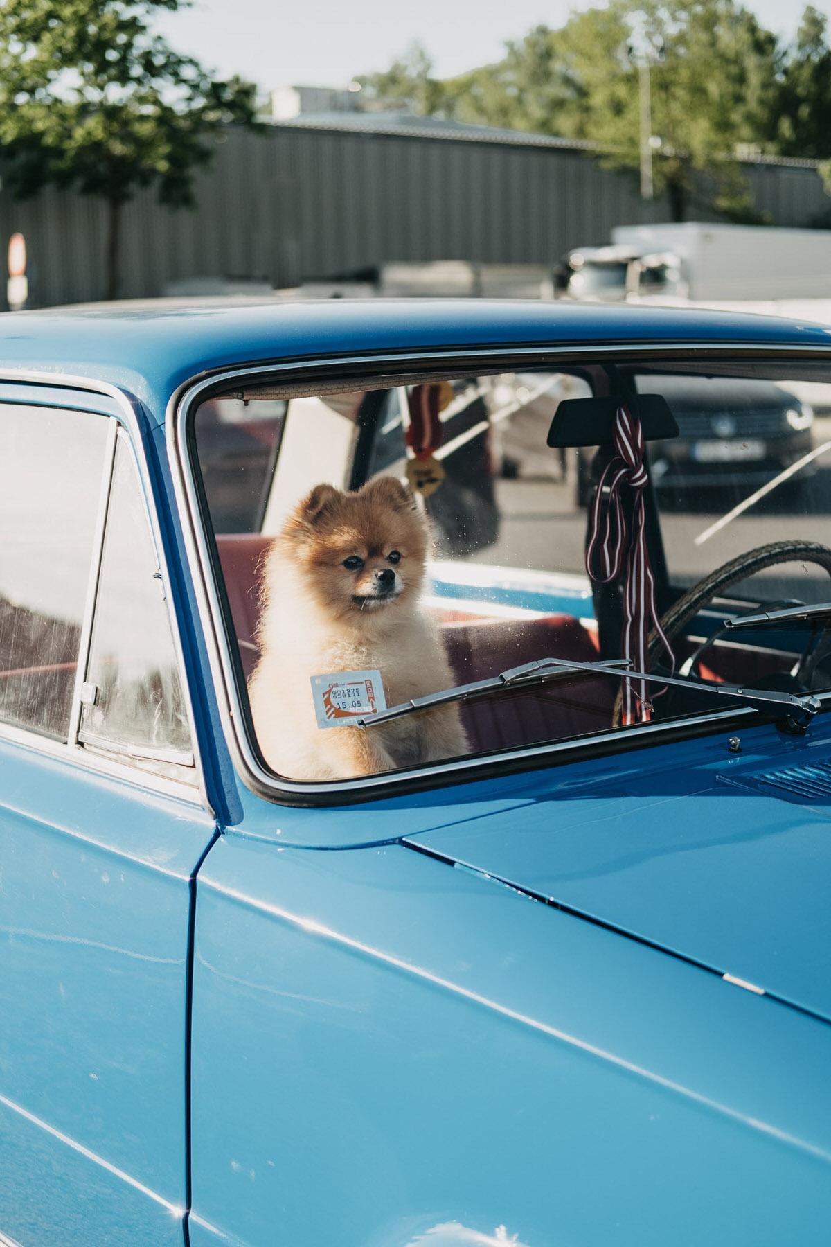 Suns Māšīnā | Pilsētas piezīmes
