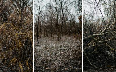 Pavasaris | Marts