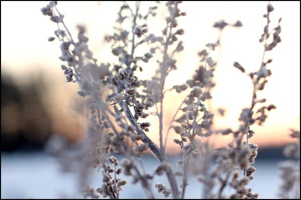 Lieldienu ziema ,ekrāntapete